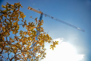 Tree and construction